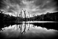 Dead trees on the Margaret River Weir